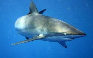 Lo steroide scoperto in uno squalo può attaccare il Parkinson