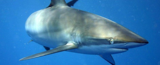 Steroid Discovered in a Shark Can Attack the Toxin Associated with Parkinson's Disease